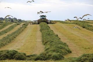 Silage at Bridge of Weir