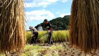 کارگران در ژاپن