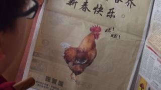 """這頭""""汪汪叫的雞""""只刊登在馬來西亞的中文報章"""