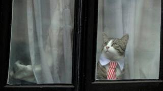 A cat dressed up with a collar and tie looks out from a window of the Ecuadorian embassy in London