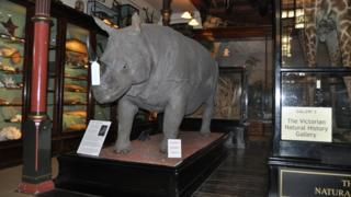Natural history section of Ipswich Museum.