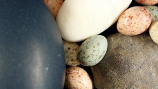 Dinosaur egg with bird eggs