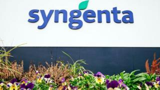 Syngenta logo in blue