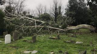 Broken down tree at Ilford Pet Cemetery