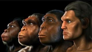 Солдон оңго: австралопитек, жөндөмдүү адам (homo habilis), түз баскан адам (homo erectus), аң-сезимдүү адам (homo sapiens). Бирок, бул тизме дагы толукталат окшойт...