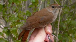 environment bird