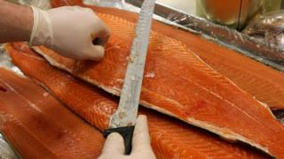 Farmed Scottish salmon being trimmed