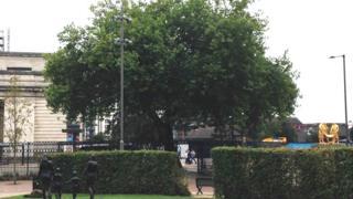 London Plane tree in Broad Street
