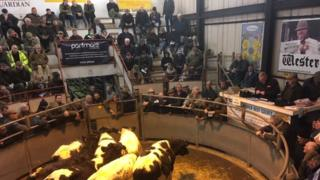 Last day of Shaftesbury Cattle Market