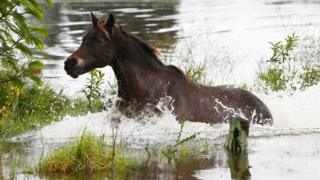 A horse runs in flood waters on April 22, 2015 near Dungog, Australia. Three people have died and more than 200,000 are still without power as cyclonic winds and rains continue to lash the Sydney, Hunter Valley and Central Coast regions of New South Wales