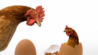 Gallina y huevo