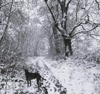 Hannah Smith captured Bramble the three-legged lurcher on a snowy walk today in Saline, Fife