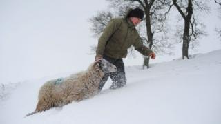 Человек с овцой в глубоком снегу