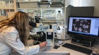 Researcher Chiara Bertelli looking at shells through a microscope
