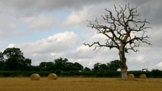 Farm with bales and ominous tree