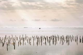 বিরান সমূদ্র তটে এক নিঃসঙ্গ অক্টোপাস শিকারি