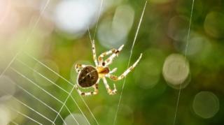 แมงมุมโดยทั่วไปไม่ได้ดุร้ายเหมือนในบางสายพันธุ์