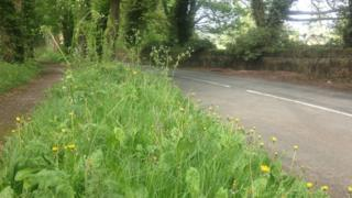 A roadside grass verge and footpath in Wrexham