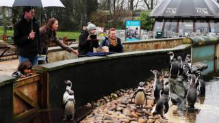 People looking at penguins at Twycross Zoo