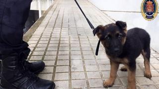 German shepherd puppy recued by Granada police