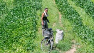 Agricultor norte-coreano