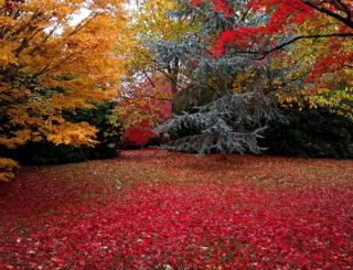 Red leaves on the ground