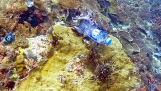 Plastic bottle wedged in the coral reef