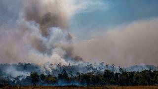 Fumaça entre árvores na Amazônia
