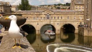 Gull in Bath city centre