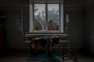 A dog at the SOS shelter in Kiev