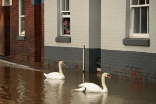 in_pictures A youth looks out of a partially-submerged building as swans paddle in the flood waters in Shrewsbury, 26 February 2020.