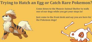 Muncie Animal Shelter Pokemon post