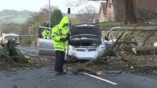Tree branch across car which caused fatal injury