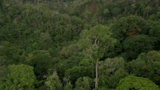 Igiti kirekire gusumba ibindi muri Afrika kiri ku musozi wa Kilimanjaro muri Tanzania