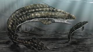 illustration of prehistoric shark