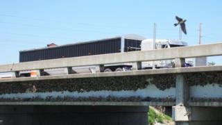 Andorinhas e seus ninhos debaixo de uma ponte