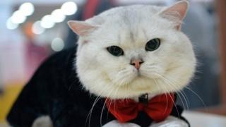 Cette thérapie censée créer un trait d'union entre collègues utilise des chats.