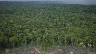 غابات الأمازون