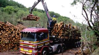 A lorry lifts wood