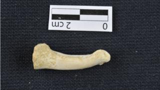 Proximal foot phalanx
