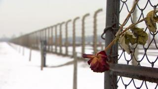 A red rose in the wire fence at the Auschwitz-Birkenau concentration camp