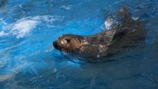 Temperance the grey seal