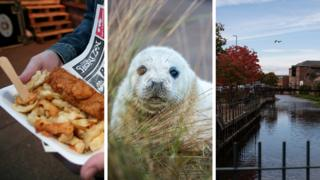 Grimsby fish and chips, a seal, and Grimsby countryside