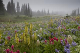 A field full of wild flowers with mist-covered trees in the background