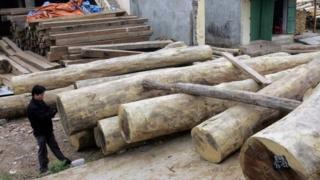 Việt Nam, Campuchia, buôn lậu gỗ