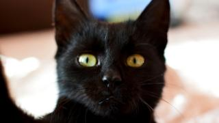 black cat looking at phone camera