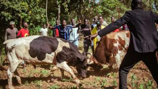 People cheer on the animals during a bull fight in western Kenya