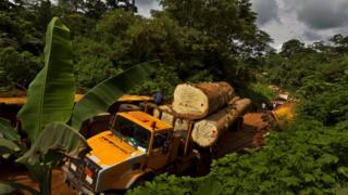La forêt du bassin du Congo menacée par la déforestation