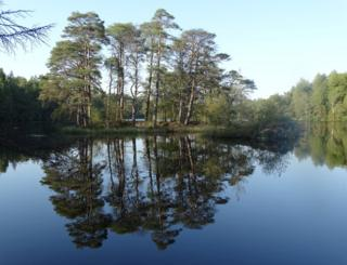Trees reflected in still water