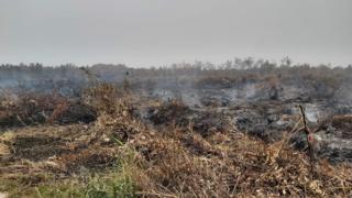 Kebakaran lahan gambut di Palangkaraya